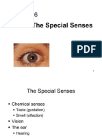 Lecture 16 - Special Senses