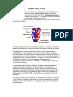 Sistema Circulatorio Educacion Fisica