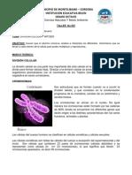 Taller No 007 Division Celular Mitosis