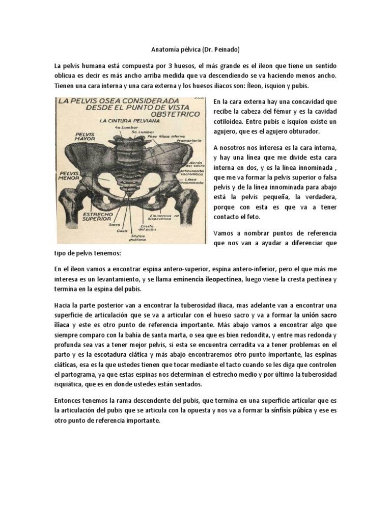 Anatomía pélvica (Dr Peynado) Uninorte