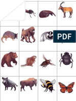 Animal Picture Flashcards