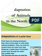 Adaptation of a Polar Bear.3
