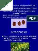 Anatomia da semente-Tegumento