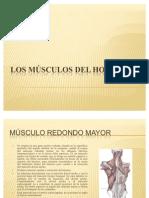Los músculos del hombro
