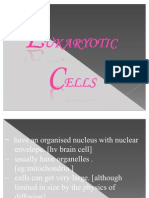 Eukaryotic Cell....