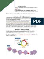 Embriologia Divisão celular