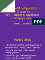 IntroDrosophila