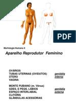 AnatoII-ReprFem