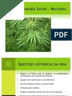 Cannabis Sativa – Maconha