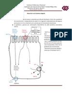 Bioquimica de Aparato Digestivo
