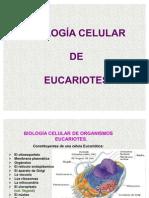 Celula_Eucariota