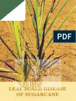 Leaf Scald Disease of Sugarcane