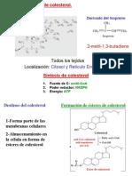 Biosíntesis Del Colesterol