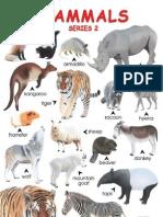 Animal Classificatiob