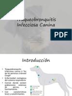 Traqueobronquitis Infecciosa Canina Original)
