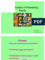 Reproduction in Flowering Plants (1)