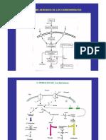 clase 2011-degradación aeróbica de carbohidratos