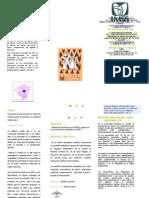 Triptico Protocolo Micronucleos Gina