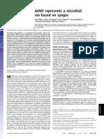 Clostridium Ljungdahlii Represents a Microbial