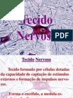 TECIDO NERVOSO - AULA 3