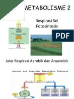 20-fotosintesis