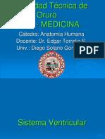 sistema-ventricular22222-dsg