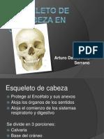 Esqueleto de La Cabeza en General