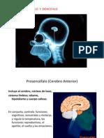 Neuroanatomia 1de2