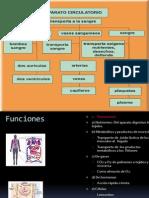 Resumen de Anatomia, Dra. Olga Itzel, 2 Parcial