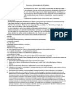 Estructura Microscópica de la Madera