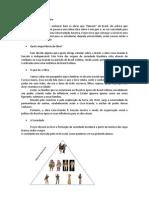 Texto - Casa-Grande & Senzala