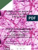 Interacciones entre las células y la Matriz Extracelular