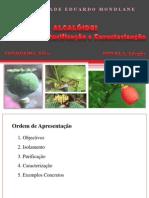 ALCALÓIDES - APRESENTAÇÃO (09.05.2011) - CONDOEIRA,Silva