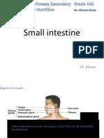 Small Intestine- Lesson 3- Mfundo Khoza.