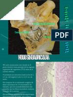 sistema circulatorio-cito