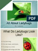 Ladybug by Ludovica