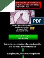5345610 Embriologia Dental