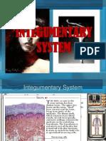 1Integumentary System