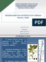 Presentación-CEREZO