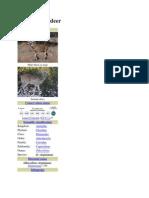 Description of Deer