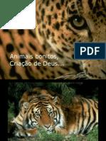 BELOS ANIMAIS...NAS FOTOS!