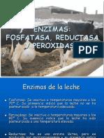 Fosfatasa,Peroxidasa y Reductasa