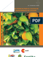 Recomendaciones Técnicas para el Cultivo de Cítricos en el Departamento de Caazapá - PortalGuarani