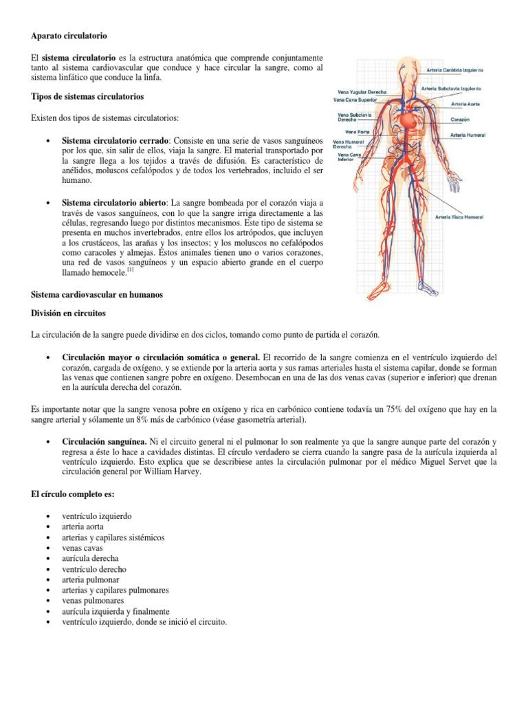 Hermosa Anatomía De Sangre Imagen - Imágenes de Anatomía Humana ...