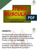 Vii - Aula Sistema Muscular
