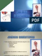 Expo Anexos Digestivos