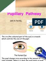 Pupiliary Pathway