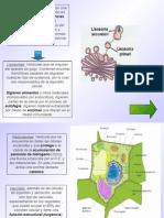 Procarionte_Eucarionte17_26