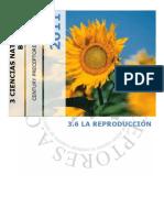 3.6 La Reproduccin