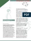 Cerebro PDF